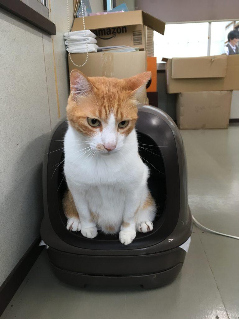 動愛園 看板猫にゃんた 大雨のため、室内で用を足す